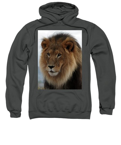 Out Ofafrica  Lion 4 Sweatshirt