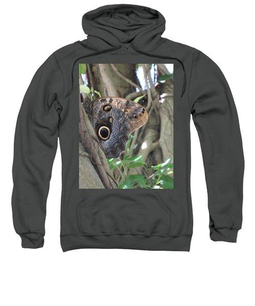 Owl Butterfly In Hiding Sweatshirt