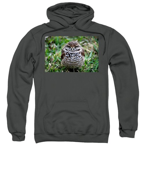 Owl. Best Photo Sweatshirt