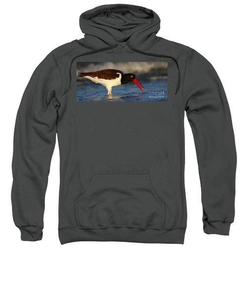 Oystercatcher In Surf Sweatshirt