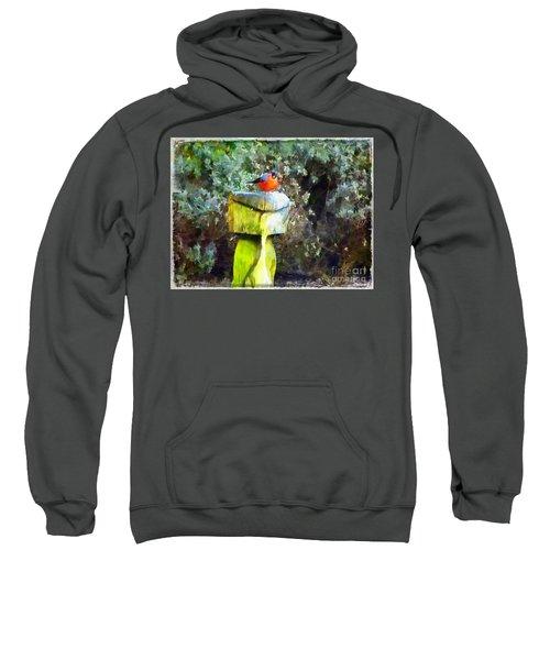 Painted Bullfinch S2 Sweatshirt
