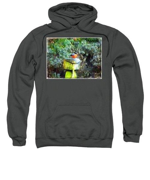 Painted Bullfinch S1 Sweatshirt