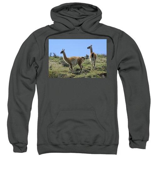 Patagonian Guanacos Sweatshirt by Michele Burgess