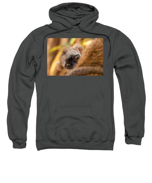 Peekaboo Sweatshirt by Alex Lapidus