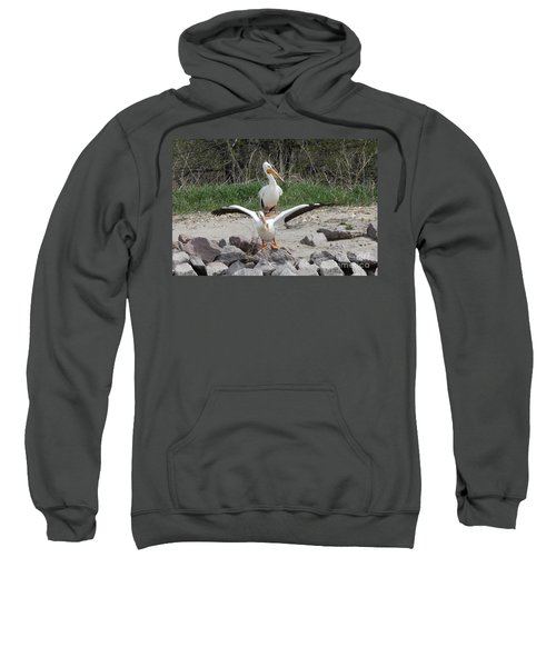 Pelican Taking Off Sweatshirt