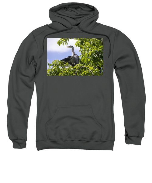 Sweatshirt featuring the photograph Perching Heron by Ross G Strachan