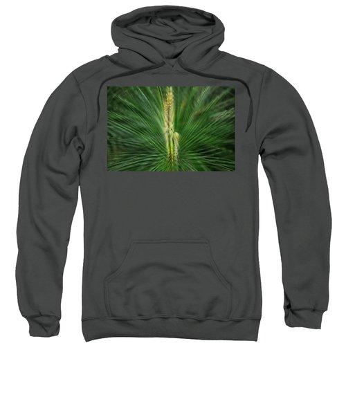 Pine Cone And Needles Sweatshirt