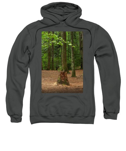 Pine Stump Sweatshirt