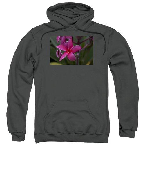 Plumeria Sweatshirt