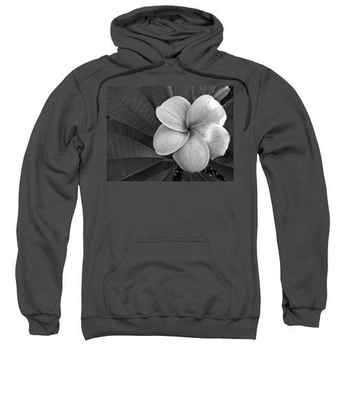 Plumeria With Raindrops Sweatshirt