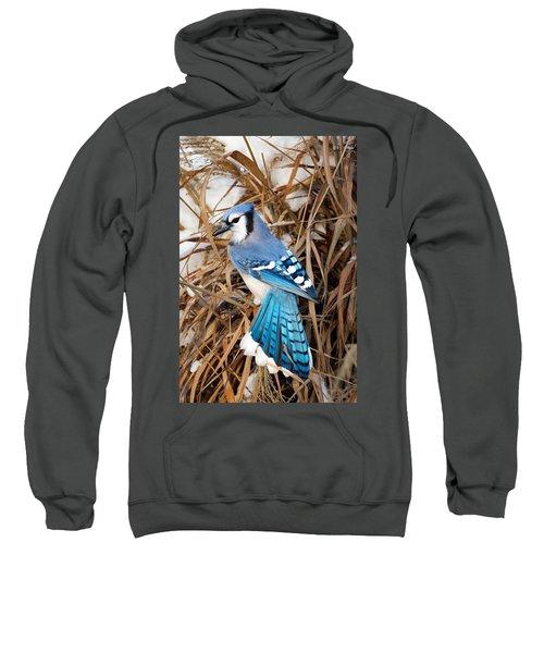 Portrait Of A Blue Jay Sweatshirt by Bill Wakeley