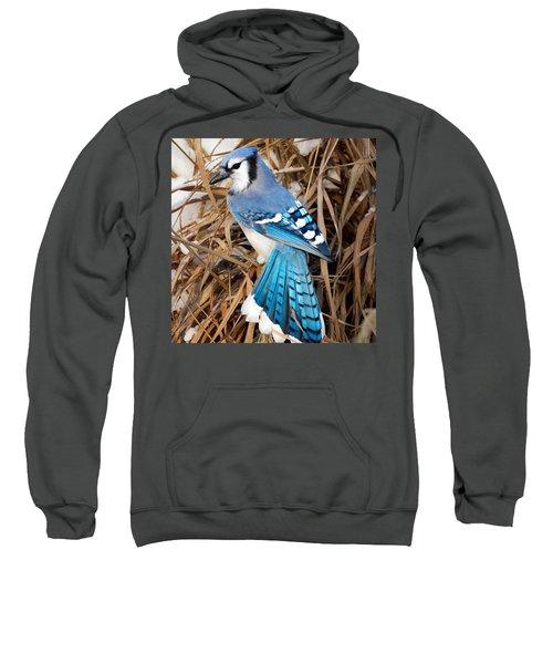 Portrait Of A Blue Jay Square Sweatshirt by Bill Wakeley