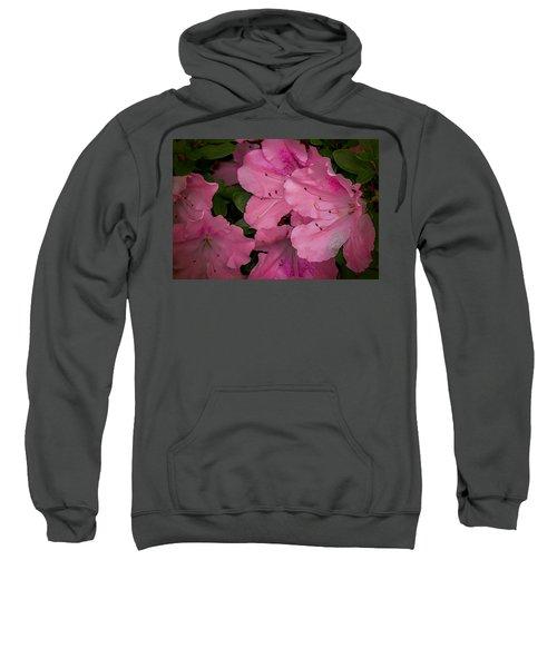 Premium Pink Sweatshirt