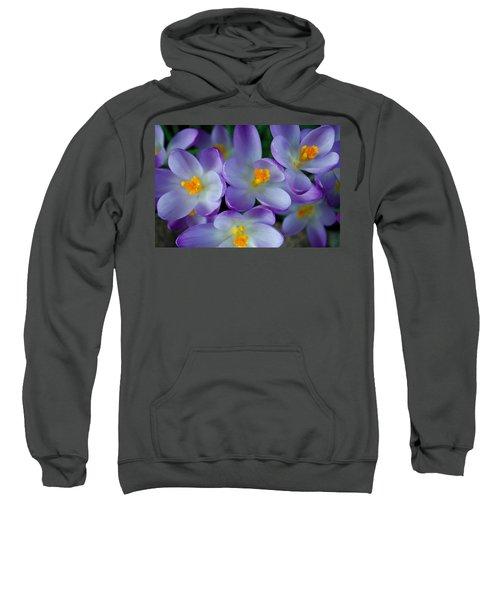 Purple Crocus Gems Sweatshirt
