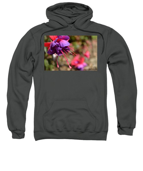 Purple Fuchsia Sweatshirt