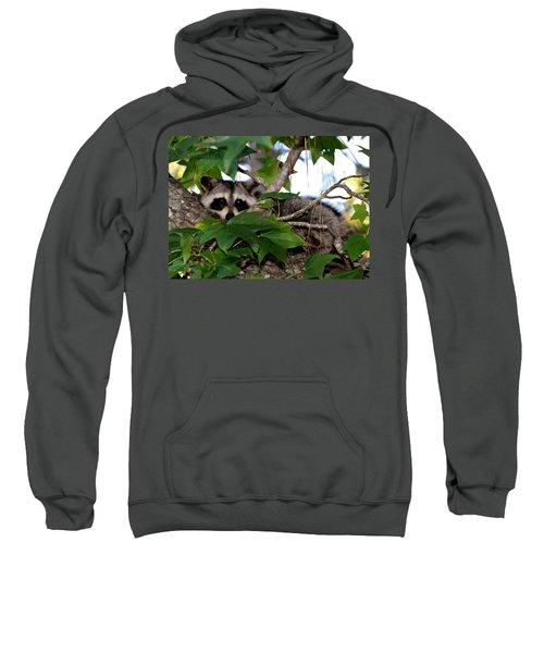 Raccoon Eyes Sweatshirt
