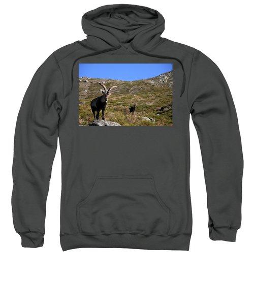 Really Close Portrait Of A Spanish Sweatshirt