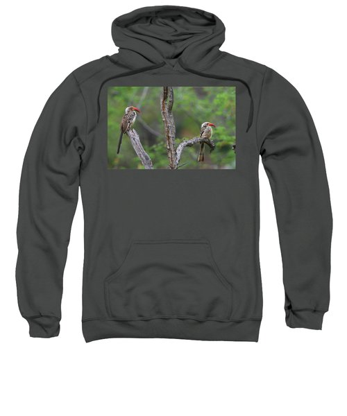 Red-billed Hornbills Sweatshirt