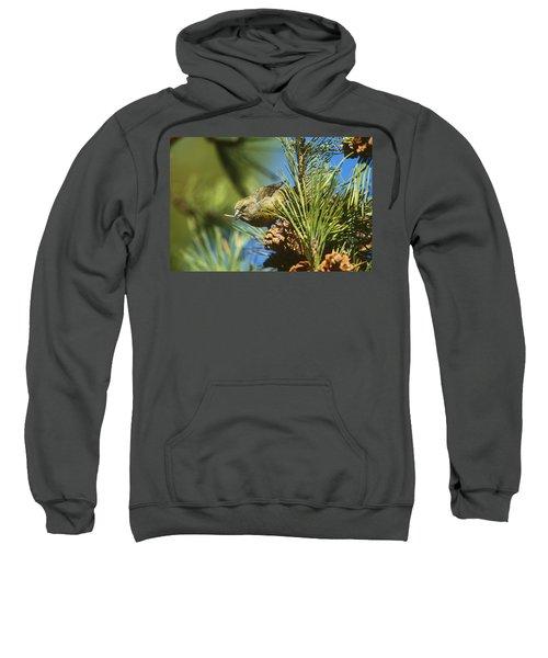 Red Crossbill Eating Cone Seeds Sweatshirt