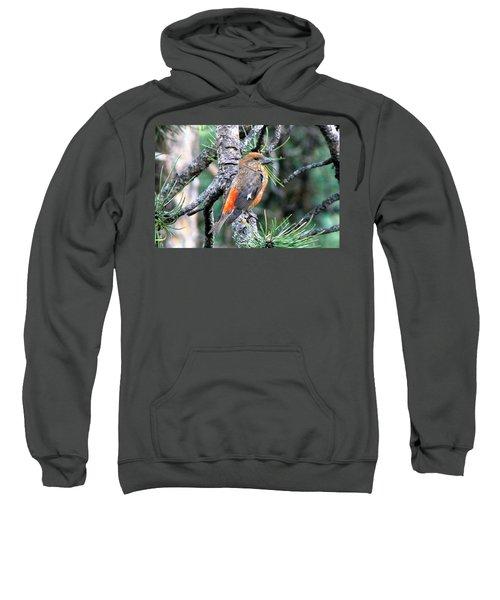 Red Crossbill On Pine Tree Sweatshirt