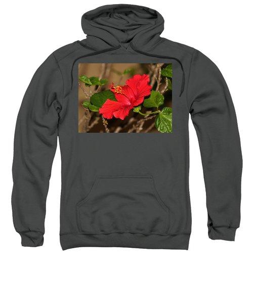 Red Hibiscus Flower Sweatshirt