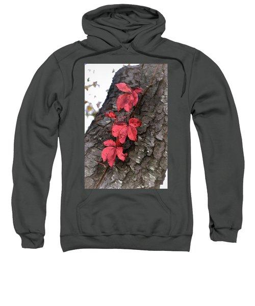 Red Leaves On Bark Sweatshirt