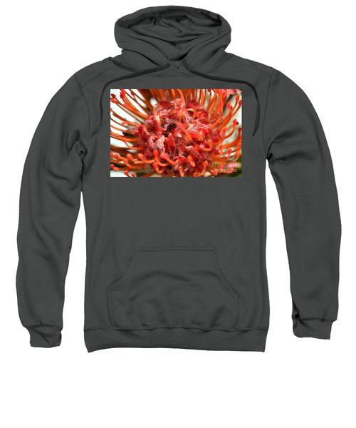 Red Pincushion Close Up Sweatshirt