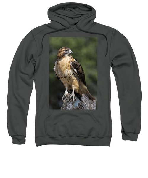 Red Tailed Hawk Sweatshirt