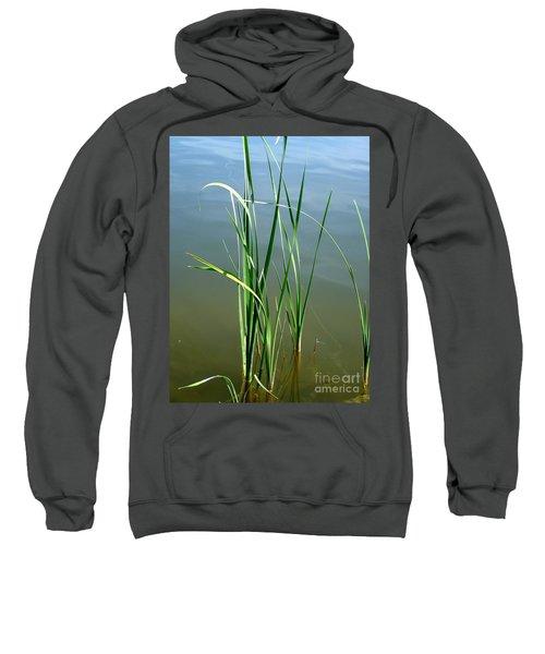 Reeds Sweatshirt
