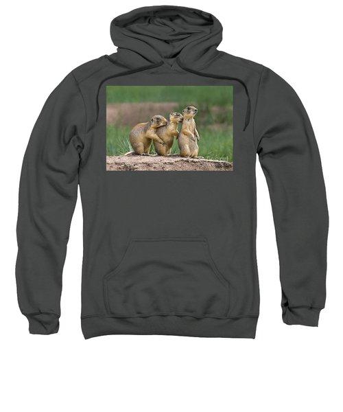 Relaxing Utah Prairie Dogs Cynomys Parvidens Wild Utah Sweatshirt