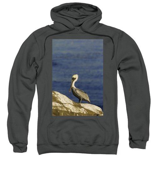 Resting Pelican Sweatshirt