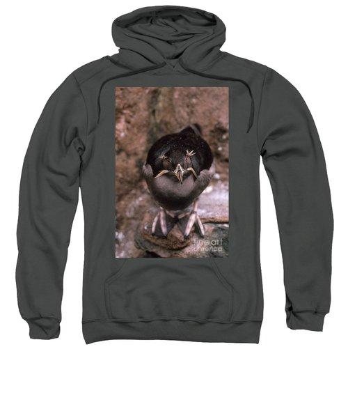 Rhinoceros Auklet Sweatshirt