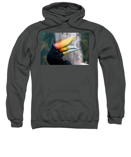 Rhinoceros Hornbill  Sweatshirt