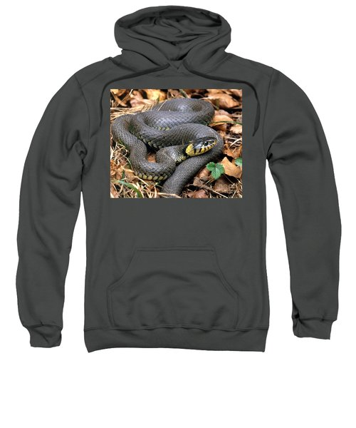 Ringed Snake Sweatshirt