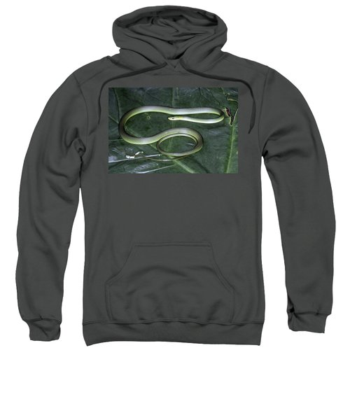 Rough Green Snake Sweatshirt