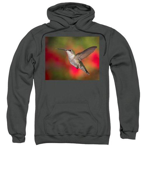 Ruby Throated Hummingbird Sweatshirt