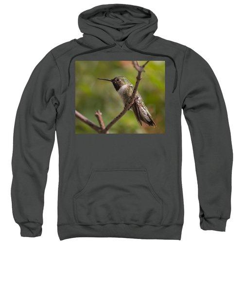 Rufous Hummingbird Sweatshirt