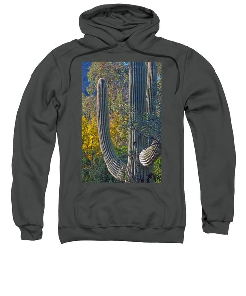 Saguaro Fall Color Sweatshirt