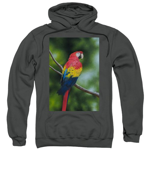 Scarlet Macaw Sweatshirt