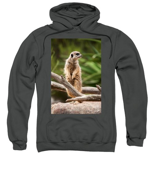 Sentry Duty Sweatshirt