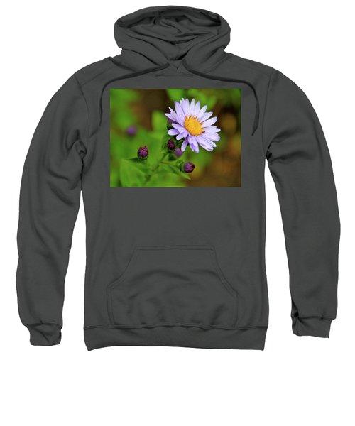 Showy Aster Sweatshirt