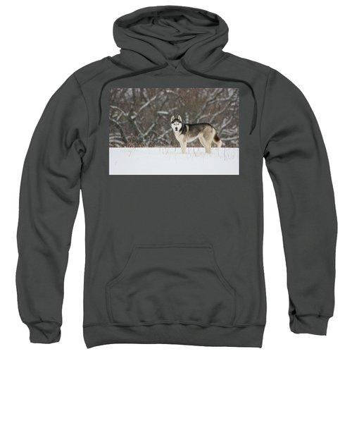I've Been Spotted Sweatshirt