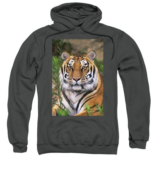 Siberian Tiger Staring Endangered Species Wildlife Rescue Sweatshirt