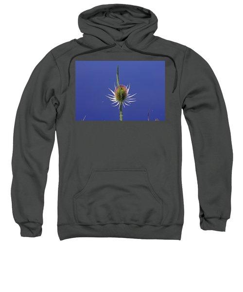 Single Teasel Sweatshirt