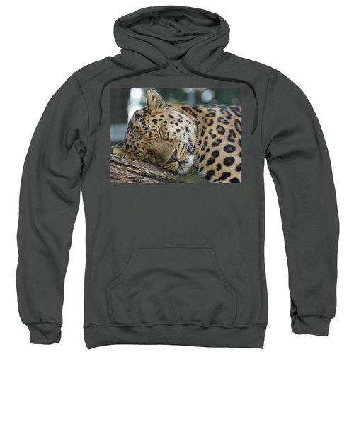 Sleeping Leopard Sweatshirt