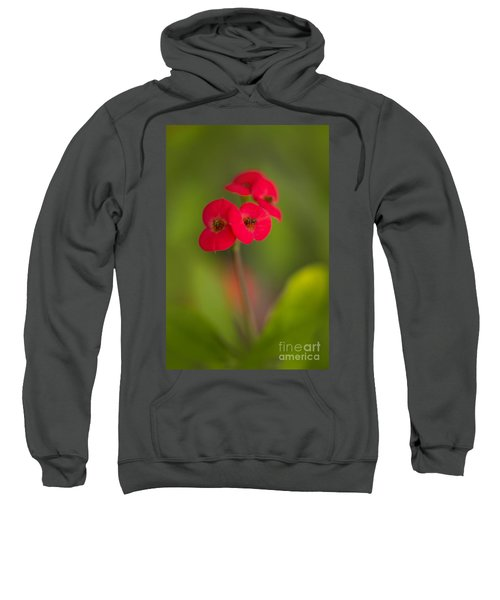 Small Red Flowers With Blurry Background Sweatshirt