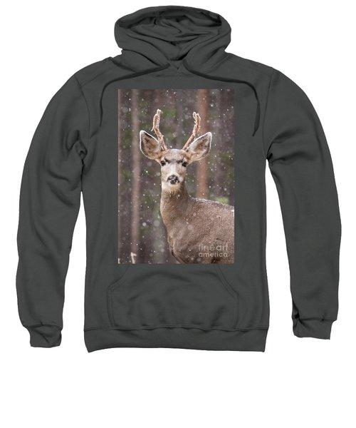 Snow Deer 1 Sweatshirt