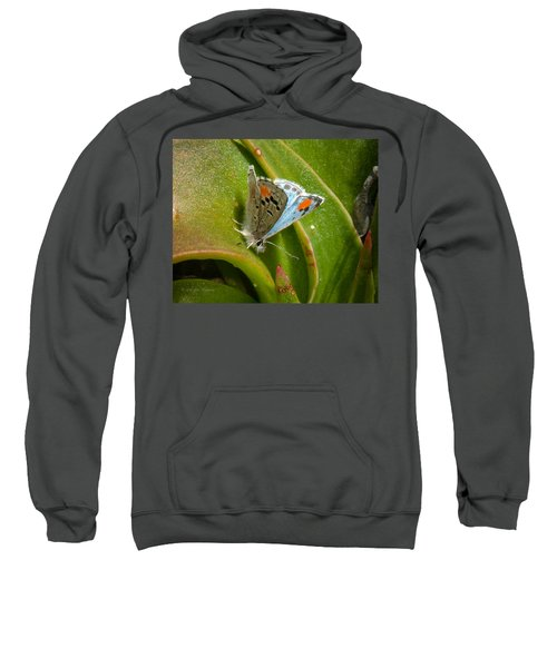Sweatshirt featuring the photograph Sonoran Blue by Jim Thompson