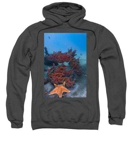 Sponges And A Star Sweatshirt