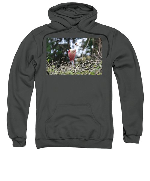 Spoonbill In The Branches Sweatshirt by Carol Groenen